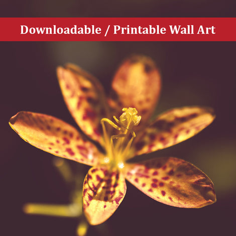 Dramatic Orange Leopard Lily Flower Floral Nature Photo DIY Wall Decor Instant Download Print - Printable