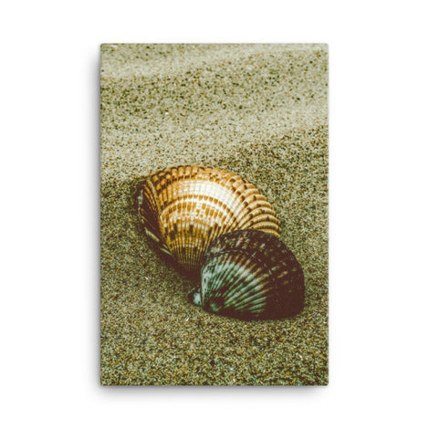 Dreamy Beach Seashells Coastal Nature Canvas Wall Art Prints