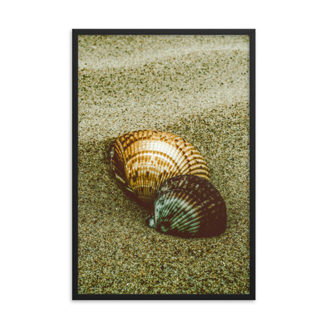 Dreamy Beach Sea Shells Coastal Nature Photo Framed Wall Art Print