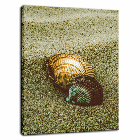 Dreamy Beach Sea Shells Colorized Coastal Nature Photo Fine Art Canvas Wall Art Prints