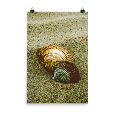 Dreamy Beach Seashells Coastal Nature Photo Loose Unframed Wall Art Prints
