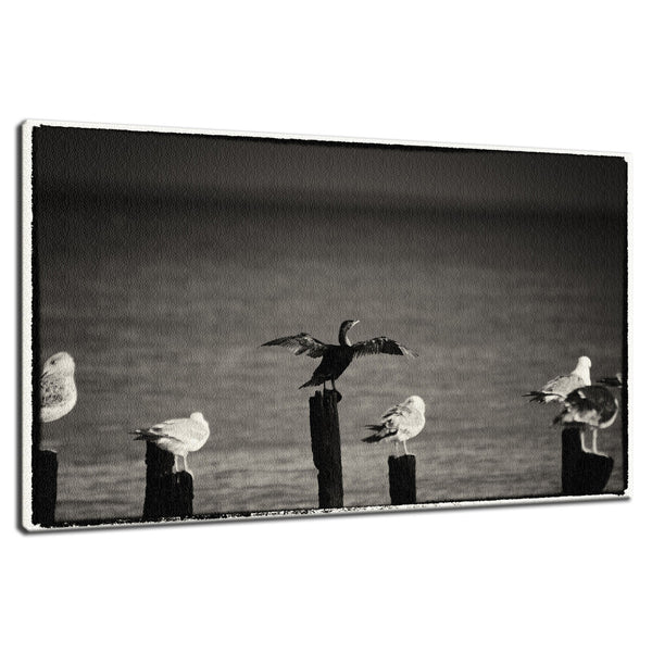 Drying Wings After Storm in Black and White Animal / Wildlife Photograph Fine Art Canvas & Unframed Wall Art Prints  - PIPAFINEART