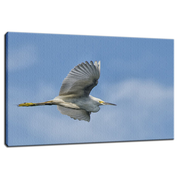 Egret in Flight Animal / Wildlife Photograph Fine Art Canvas & Unframed Wall Art Prints - PIPAFINEART
