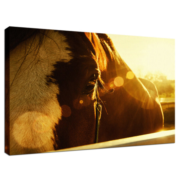 Evening Flare Animal / Horse Photograph Fine Art Canvas & Unframed Wall Art Prints - PIPAFINEART