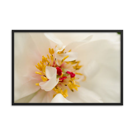 Eye of Peony Floral Nature Photo Framed Wall Art Print