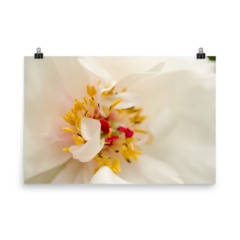 Eye of Peony Floral Nature Photo Loose Unframed Wall Art Prints