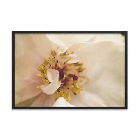 Eye of Peony Moody Midnight Floral Nature Photo Framed Wall Art Print