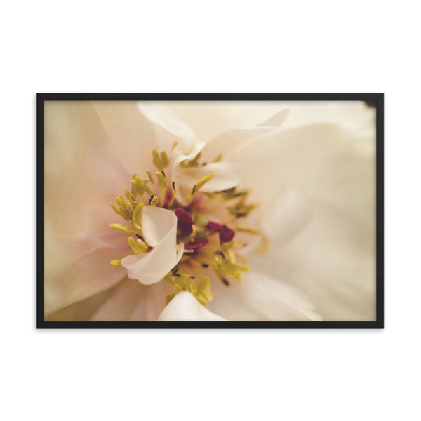 Eye of Peony Moody Midnight Floral Nature Photo Framed Wall Art Print  - PIPAFINEART