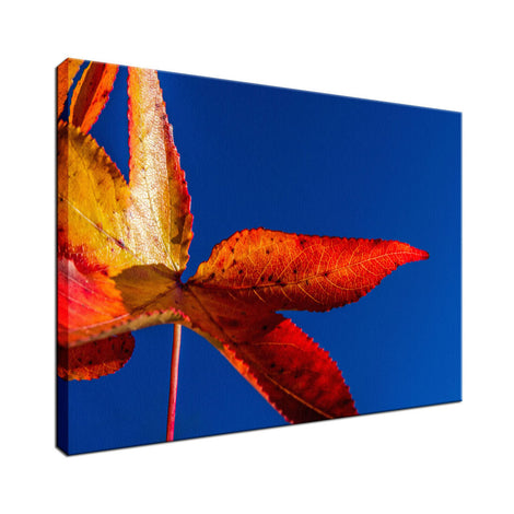 Fall Colors Nature / Botanical Photo Fine Art Canvas Wall Art Prints