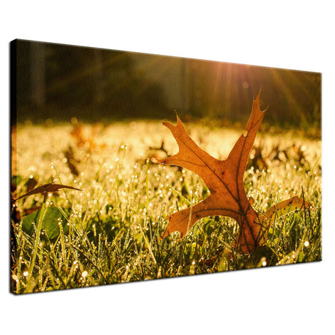 Fall Leaf in Morning Sun Botanical / Nature Photo Fine Art Canvas Wall Art Prints