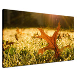Fall Leaf in Morning Sun Botanical / Nature Photo Fine Art Canvas Wall Art Prints  - PIPAFINEART