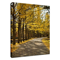 Fall Path Nature Landscape Photo Fine Art Canvas Wall Art Prints  - PIPAFINEART
