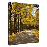 Fall Path Nature Landscape Photo Fine Art Canvas Wall Art Prints - Rural / Farmhouse / Country Style Landscape Scene