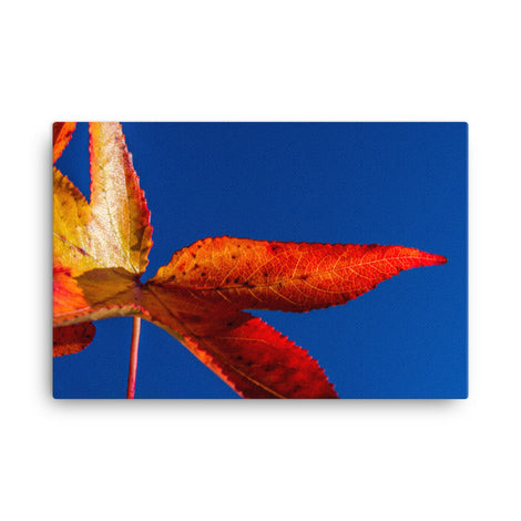 Fall Colors Botanical Nature Canvas Wall Art Prints
