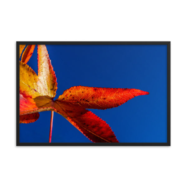 Fall Colors Botanical Nature Photo Framed Wall Art Print  - PIPAFINEART