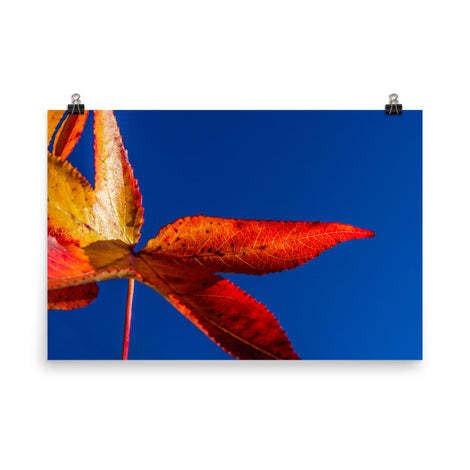 Fall Colors Botanical Nature Photo Loose Unframed Wall Art Prints