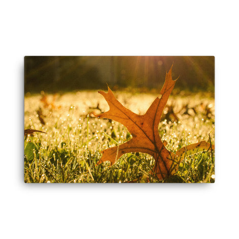 Fall Leaf in Morning Sun Botanical Nature Canvas Wall Art Prints