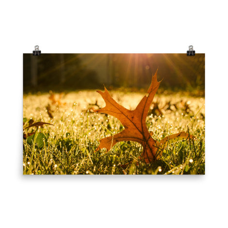 Fall Leaf in Morning Sun Botanical Nature Photo Loose Unframed Wall Art Prints
