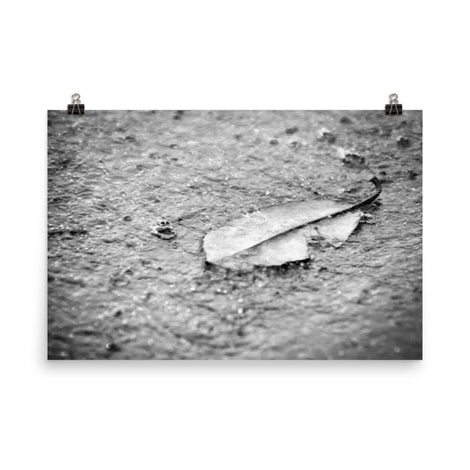 Fallen Leaf in The Rain Black and White Botanical Nature Photo Loose Unframed Wall Art Prints