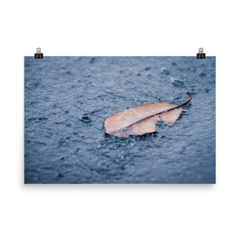 Fallen Leaf in The Rain Color Botanical Nature Photo Loose Unframed Wall Art Prints