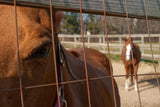 Fenced In Animal / Horse Photograph Fine Art Canvas & Unframed Wall Art Prints - PIPAFINEART