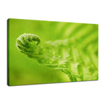 Fern Leaf Curl, Green Nature / Botanical Photo Fine Art & Unframed Wall Art Prints - PIPAFINEART