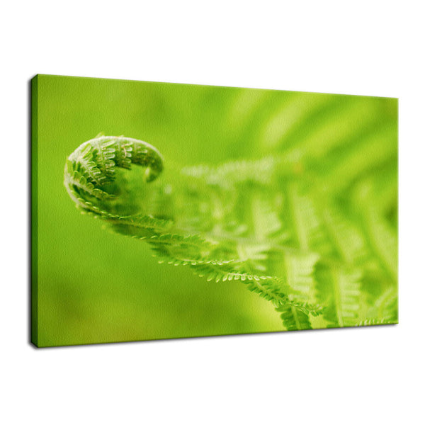 Fern Leaf Curl, Green Nature / Botanical Photo Fine Art Canvas Wall Art Prints  - PIPAFINEART