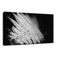 Fern Leaf in the Sunlight Botanical / Nature Photo Fine Art Canvas Wall Art Prints  - PIPAFINEART