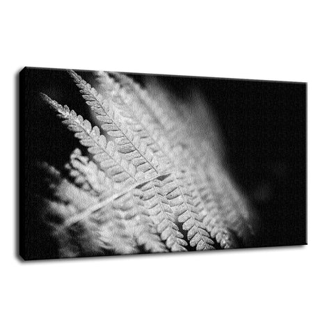 Fern Leaf in the Sunlight Botanical / Nature Photo Fine Art Canvas Wall Art Prints