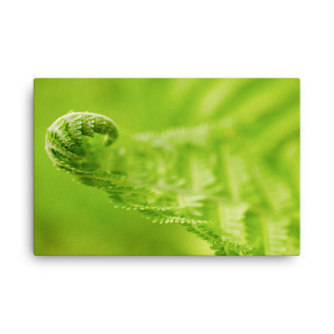 Fern Curl Botanical Nature Canvas Wall Art Prints