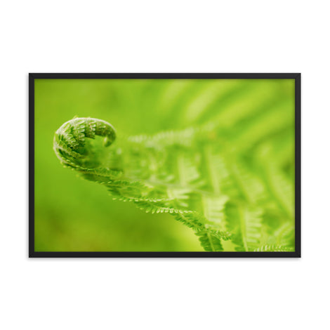 Fern Curl Botanical Nature Photo Framed Wall Art Print