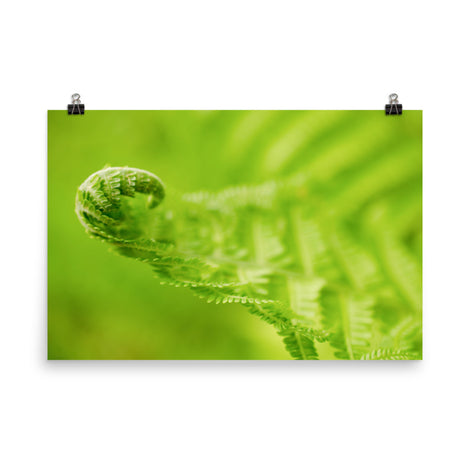 Fern Curl Botanical Nature Photo Loose Unframed Wall Art Prints