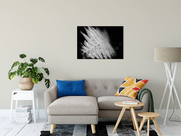 Botanical Nature Photograph Fern Leaf in the Sunlight - Fine Art Canvas - Home Decor Unframed Wall Art Prints