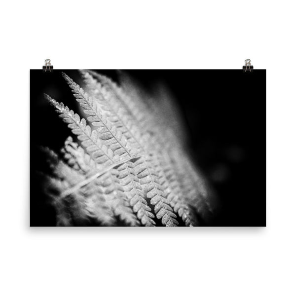 Fern Leaf In the Sunlight Black and White Botanical Nature Photo Loose Unframed Wall Art Prints  - PIPAFINEART