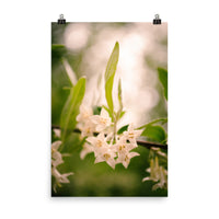 Floral Tranquility Floral Nature Photo Loose Unframed Wall Art Prints  - PIPAFINEART