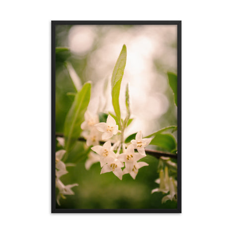Floral Tranquility Flower Nature Photo Framed Wall Art Print