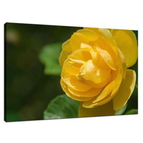 Friendship Rose Nature / Floral Photo Fine Art Canvas Wall Art Prints