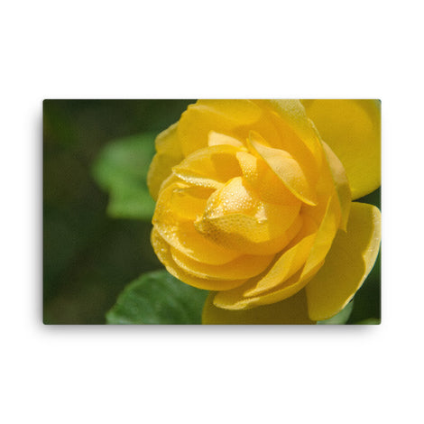 Friendship Rose Floral Nature Canvas Wall Art Prints