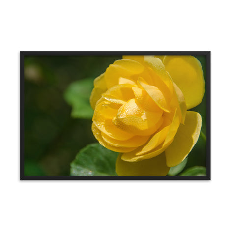 Friendship Rose Floral Nature Photo Framed Wall Art Print