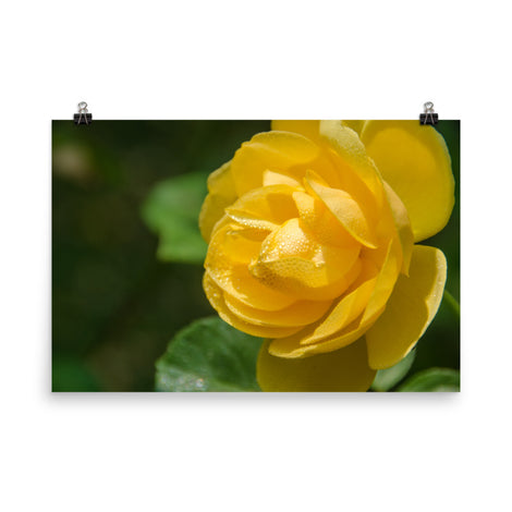 Friendship Rose Floral Nature Photo Loose Unframed Wall Art Prints