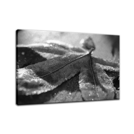 Frost Covered Leaf Botanical / Nature Photo Fine Art Canvas Wall Art Prints