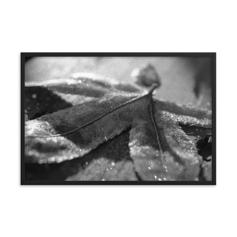 Frost Covered Leaf Black and White Botanical Nature Photo Framed Wall Art Print