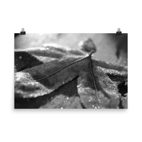 Frost Covered Leaf Black and White Botanical Nature Photo Loose Unframed Wall Art Prints