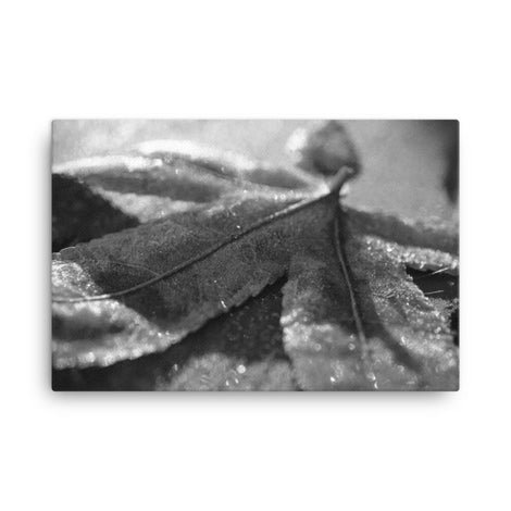 Frost Covered Leaf Black and White Floral Nature Canvas Wall Art Prints
