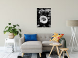 "Glowing Beach Shell Black & White Fine Art Canvas Wall Art Prints 24"" x 36"" / Canvas - PIPAFINEART"