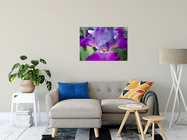 Floral Nature Photograph Glowing Iris - Fine Art Canvas Prints - Home Decor Unframed Wall Art Prints