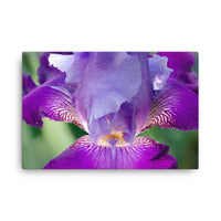Glowing Iris Floral Nature Canvas Wall Art Prints  - PIPAFINEART