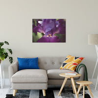 "Glowing Iris Moody Midnight Floral Photo Fine Art Canvas Wall Art Prints 24"" x 36"" / Fine Art Canvas - PIPAFINEART"