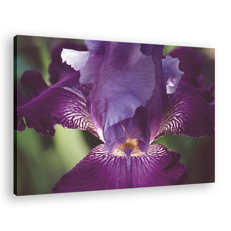 Glowing Iris Moody Midnight Floral Photo Fine Art Canvas Wall Art Prints