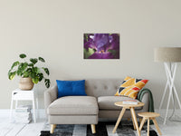 "Glowing Iris Moody Midnight Floral Photo Fine Art Canvas Wall Art Prints 20"" x 30"" - PIPAFINEART"